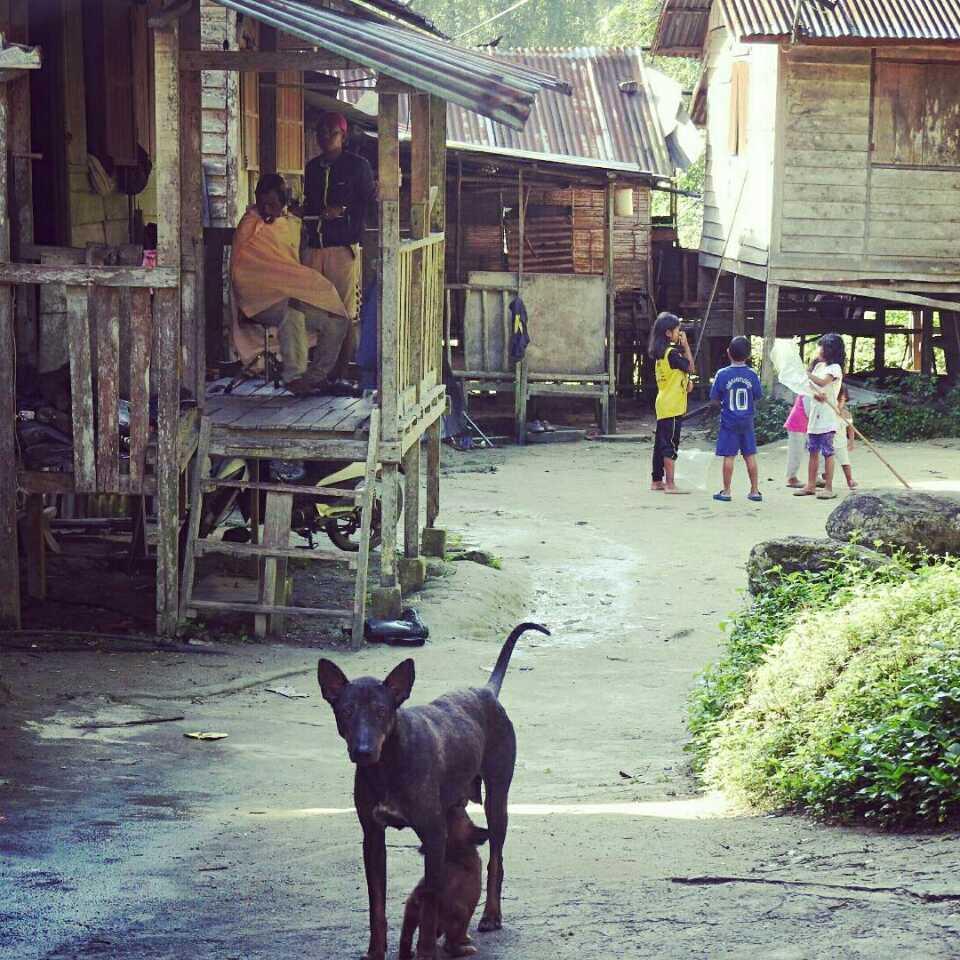 オランアスリの村とハナカマキリ