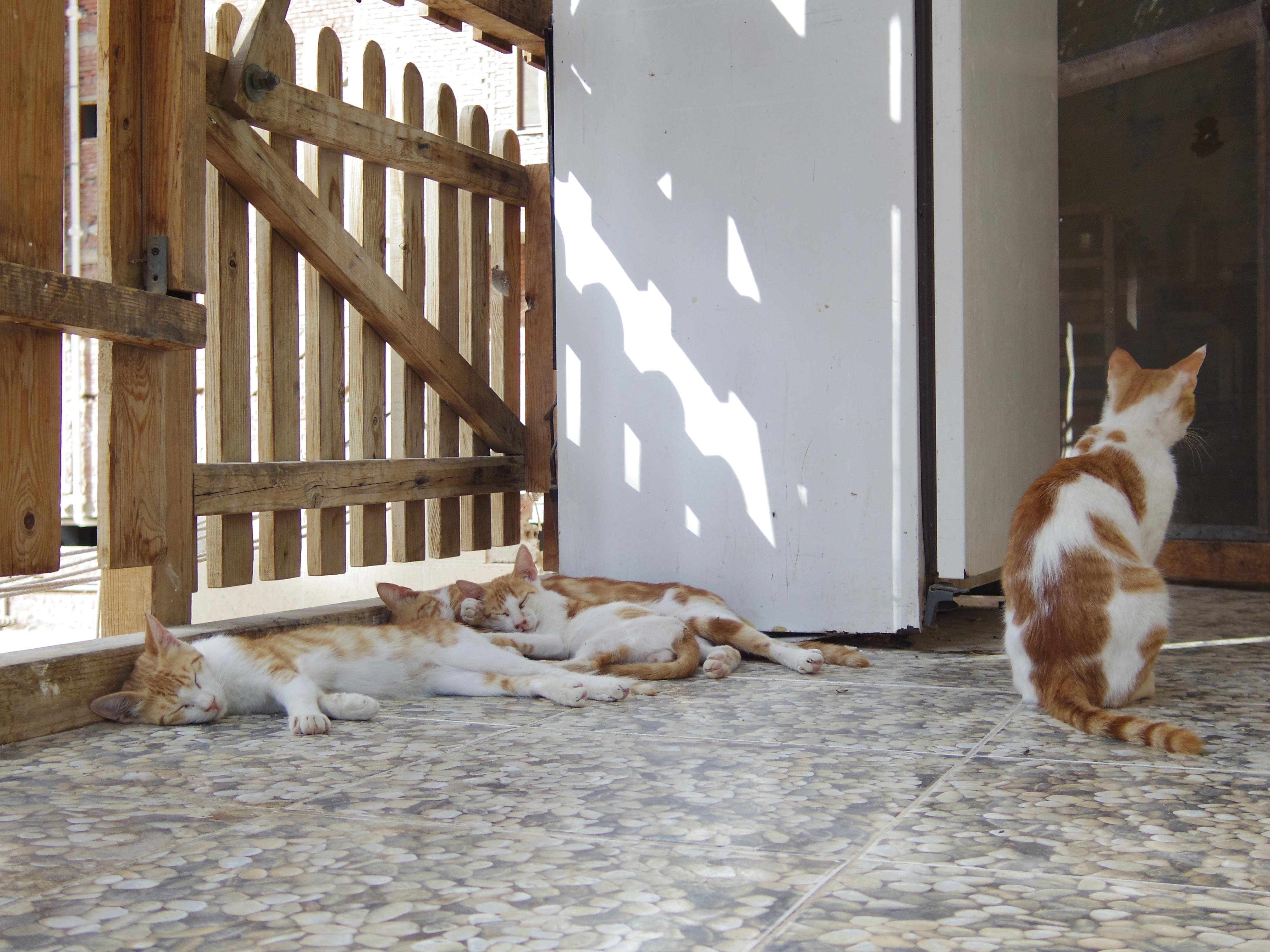 エジプト人と猫   エジプトからアッサラーム・アレイコム ...