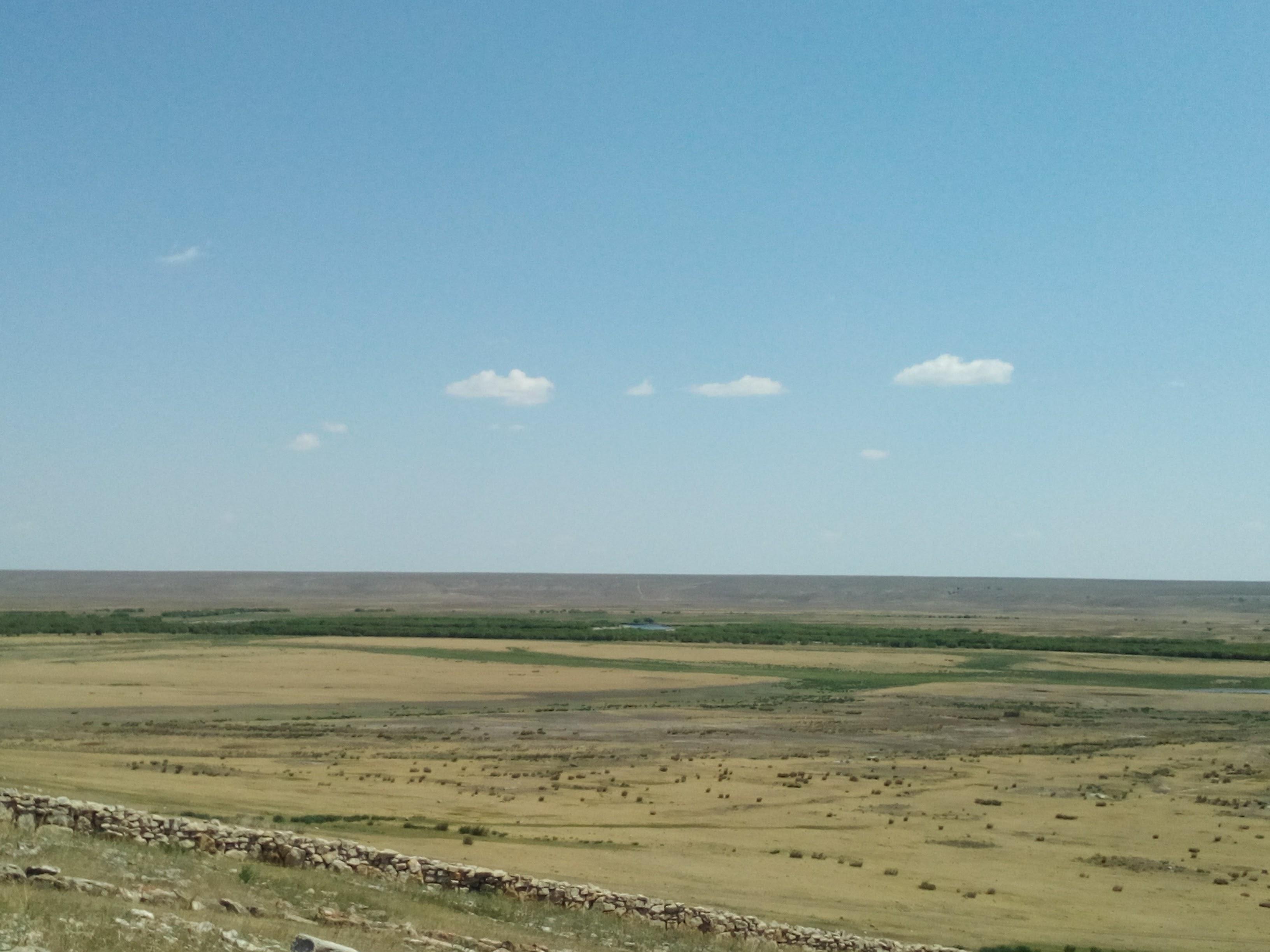 モンゴルの夏