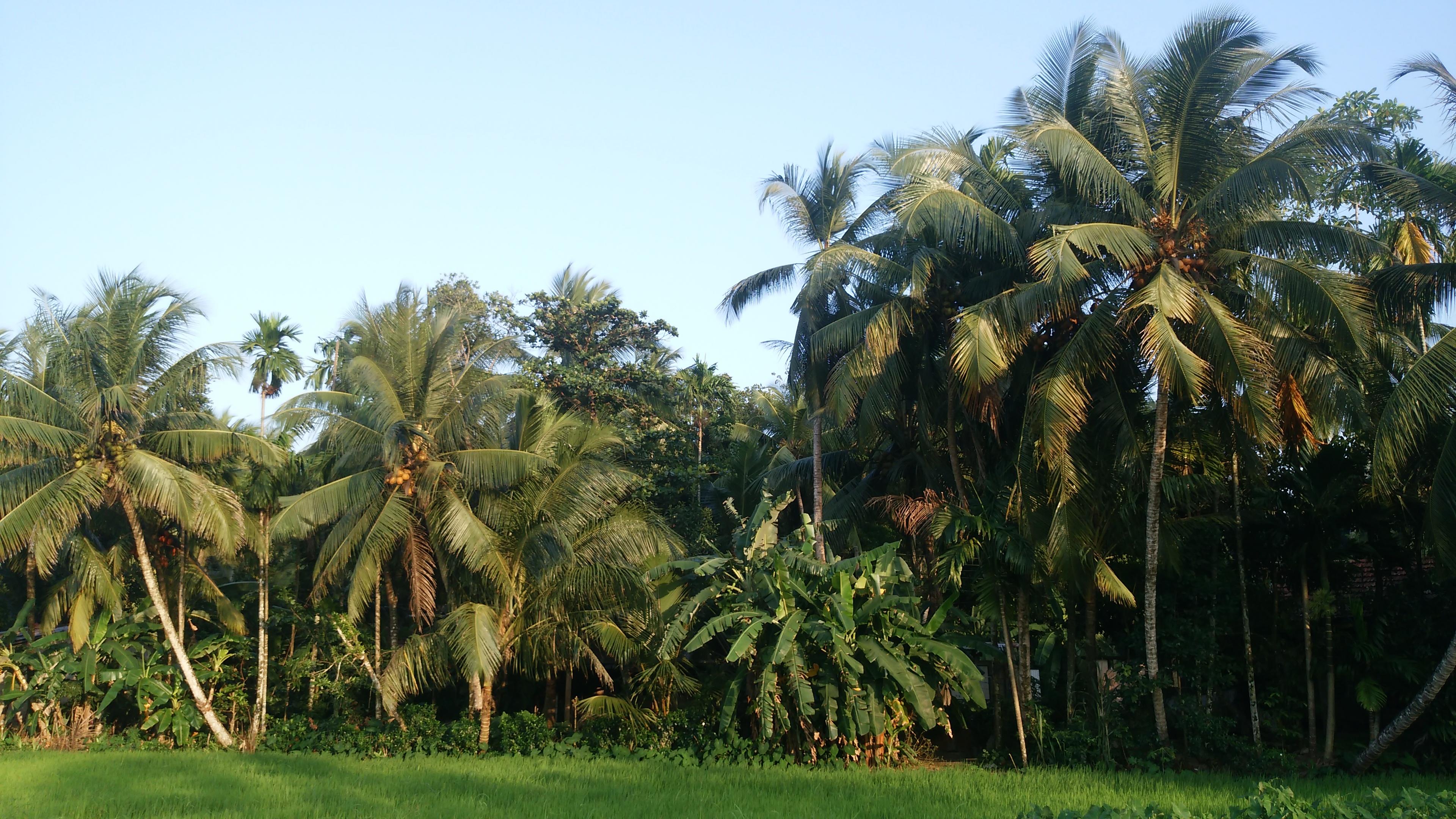 スリランカで雨季を体験