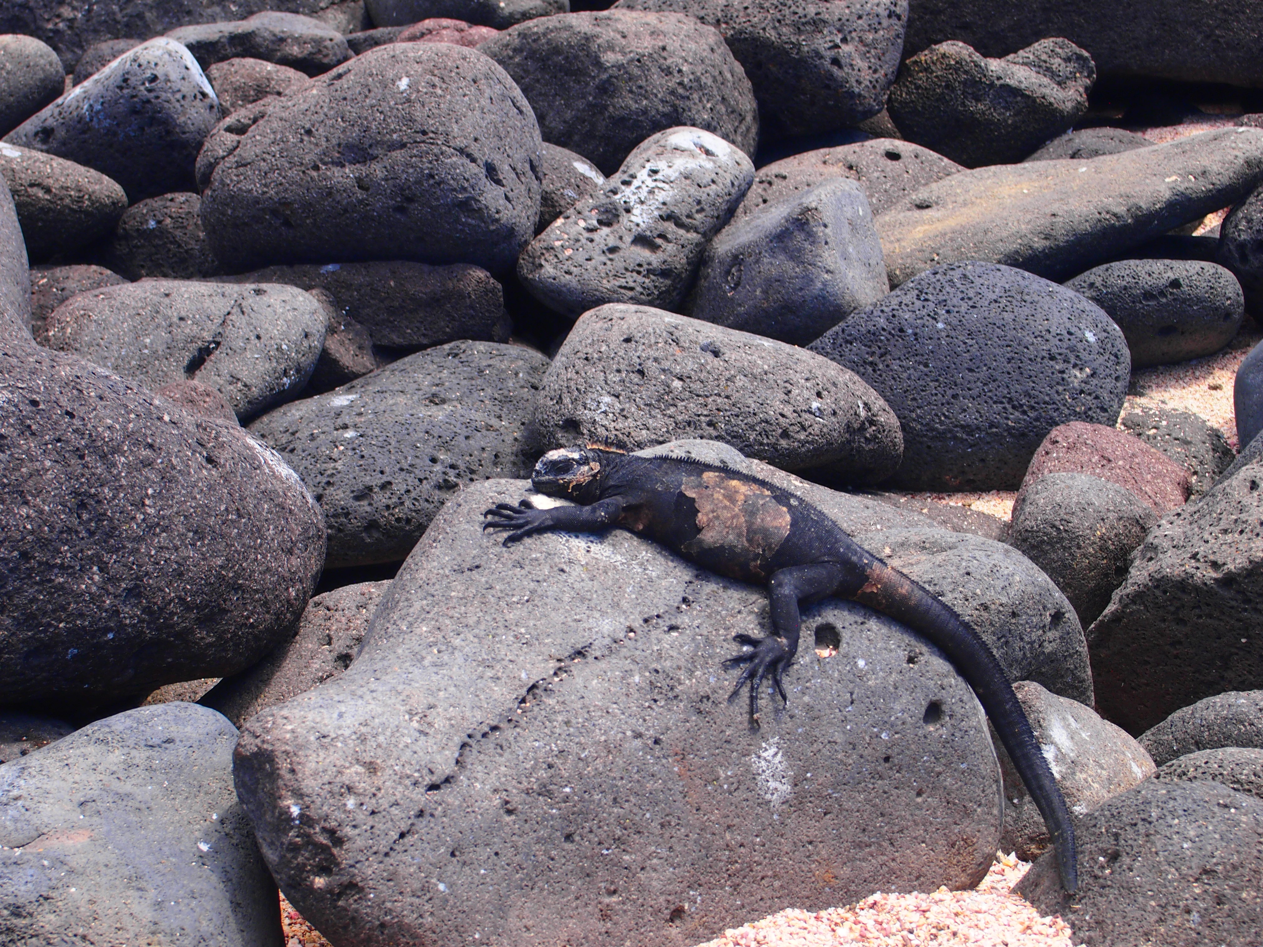動物 ガラパゴス 諸島
