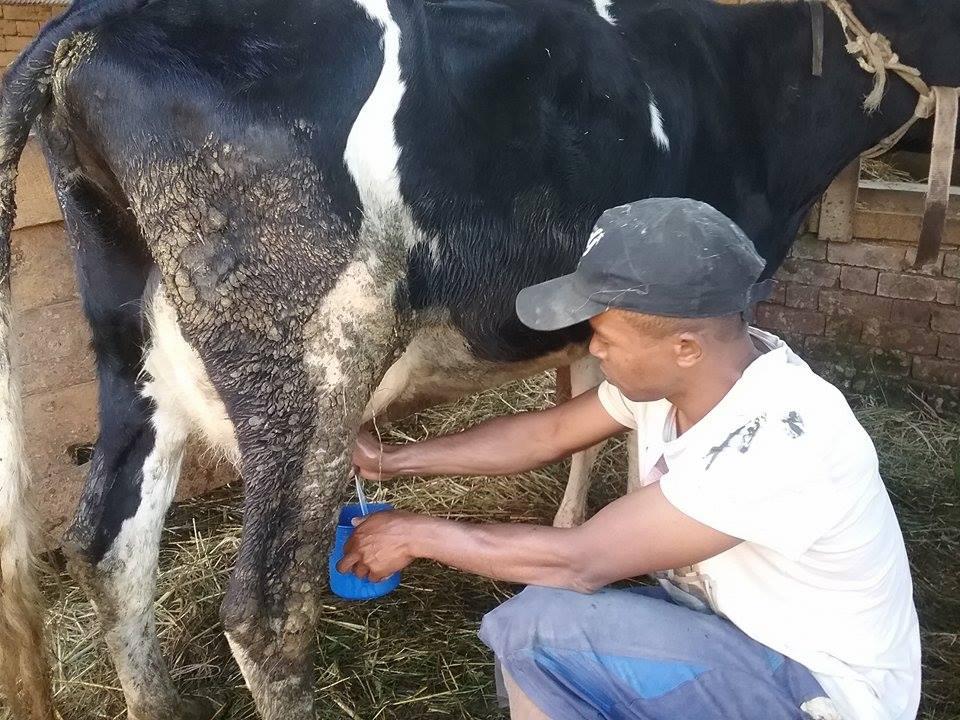 マダガスカルの農家の工夫2